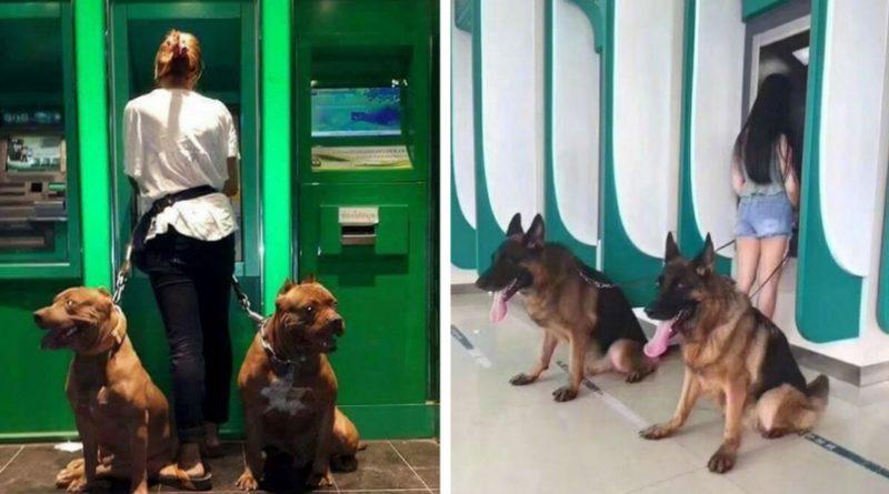 Собаки охранники