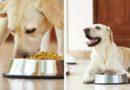 Очень важные условия кормления собак: советы ветеринарного врача