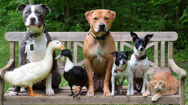 Семья спасенных животных