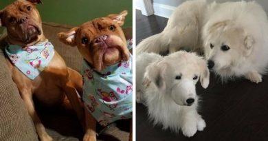 плюшевые копии домашних животных