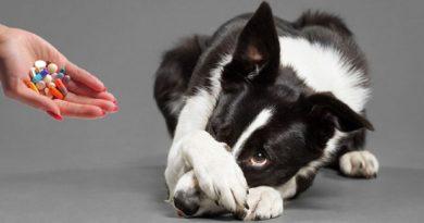 Опасные для собак лекарства
