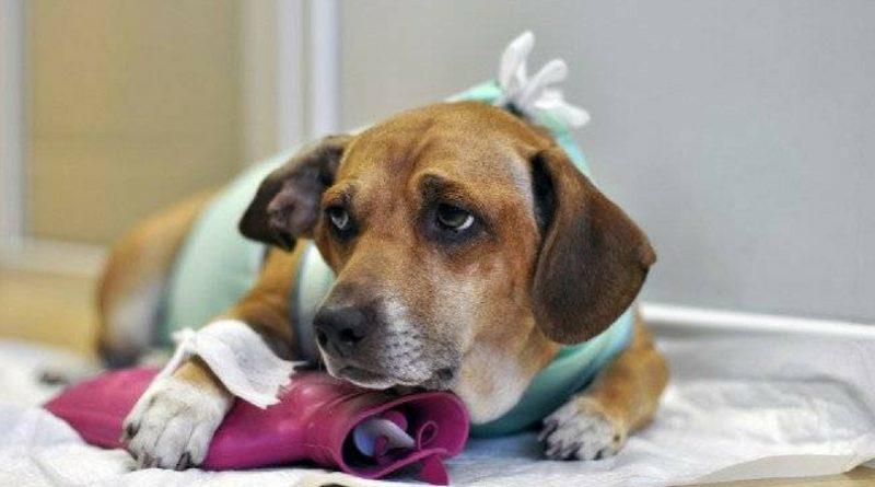 Обезболивание у собак