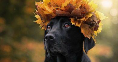 Иммунитет у собак