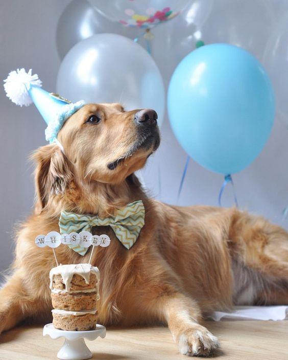 Поздравление с днем рождения от собачки