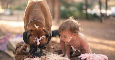 Почему собака кусает ребенка