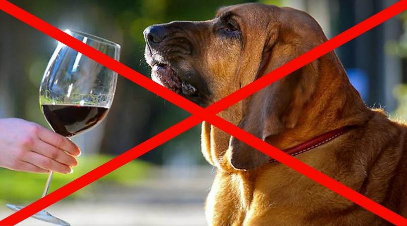 водка собаке при отравлении дому