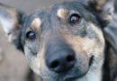 6 способов помочь бездомным животным: дорожная карта
