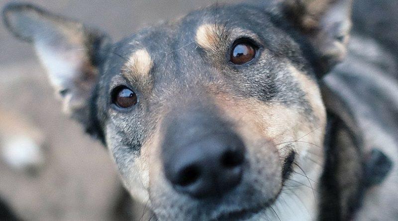 Как помочь бездомной собаке