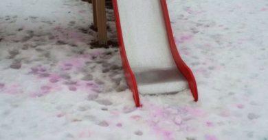 Розовый снег - отравление ядом