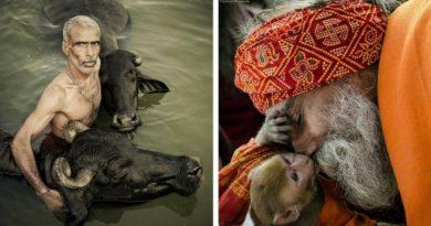 Люди и животные в Индии