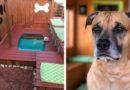 Как превратить задний двор в рай для собак