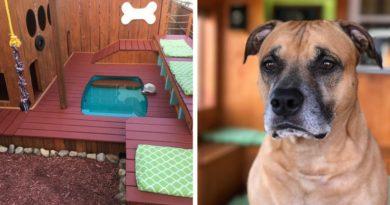 Задний двор для собак
