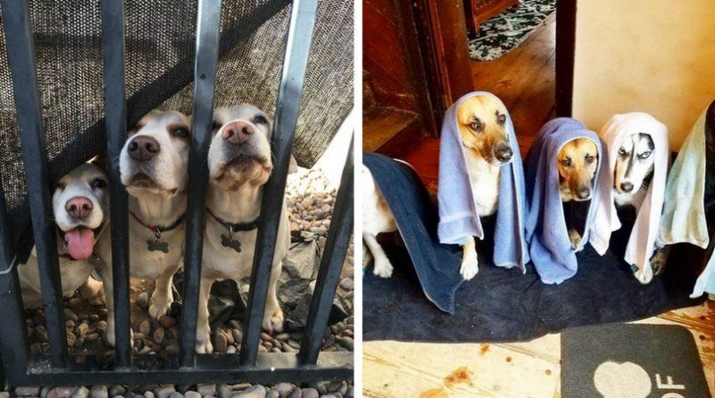 В доме много собак