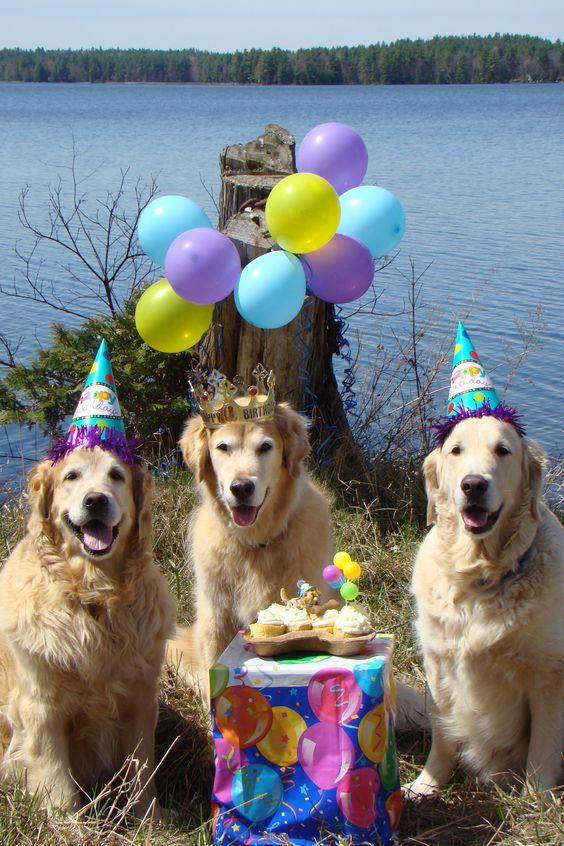 Поздравления с днем рождения фото собаки, день рождения