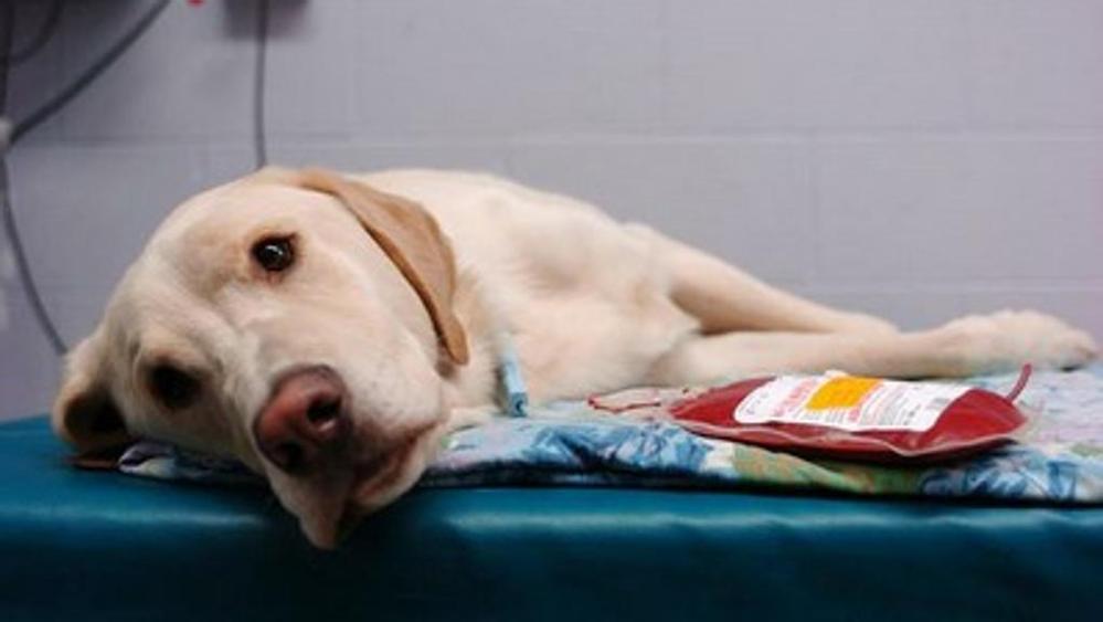 Спасение собаки при отравлении