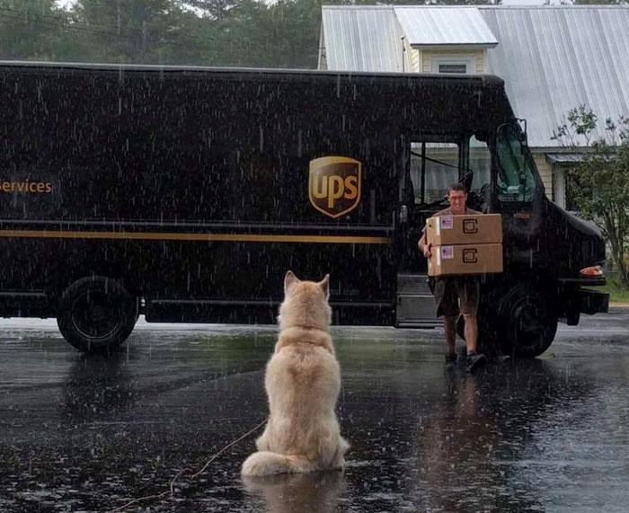собаки и почтальоны