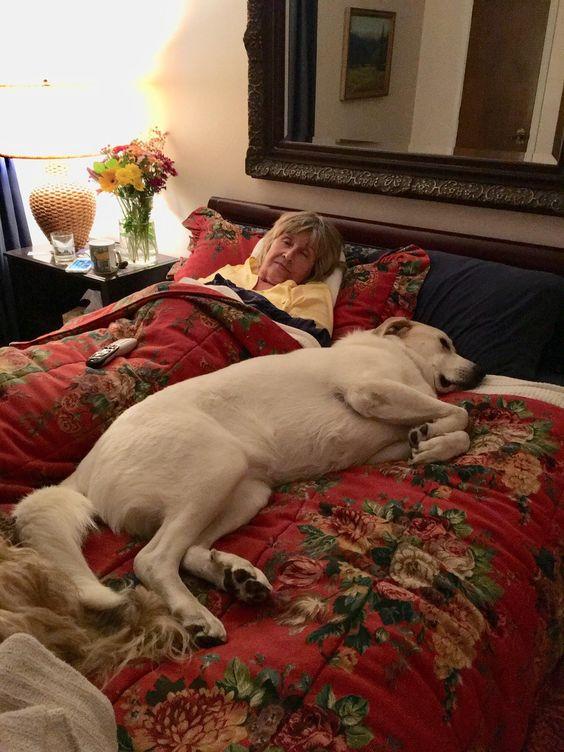 Бабушка и собаки