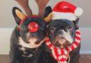 Что подарить Собачке на Новый Год: 12 толковых идей