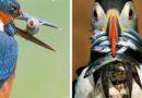 Птицы, которые решили пообедать: 30 изумительных фото