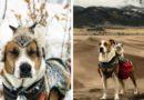 Друзяки: как спасенные пес и кот путешествуют вместе