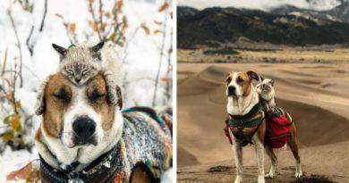 Кот и пес путешествуют вместе