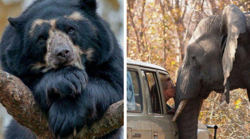 32 фото диких животных, перед которыми не устоять