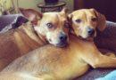 Собака и чувство собственного достоинства: как понять, что животное били