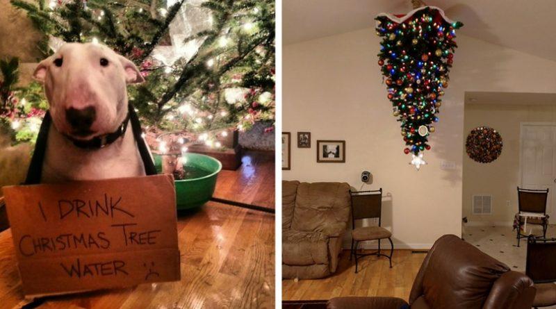 Новогодняя елки и собаки