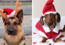 Как собаке пережить Новый Год