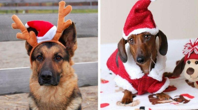 Собаки и Новый Год