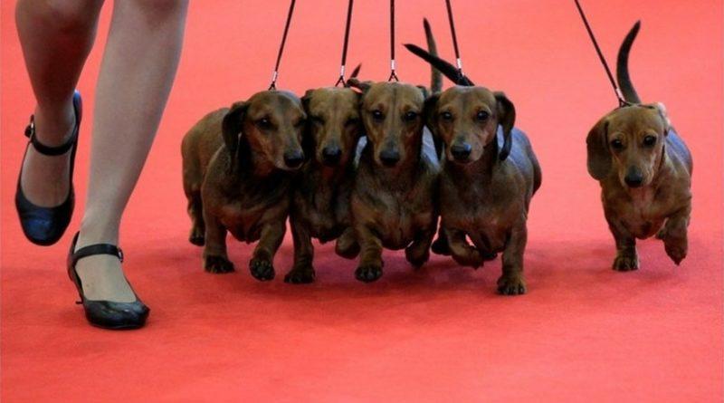 Приколы с выставки собак
