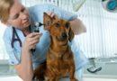 Домашний ветеринарный доктор: кто он и зачем нужен вашей собаке