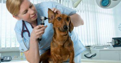 Домашний ветеринарный врач