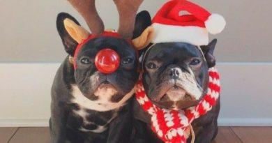 Подарок собаке на новый год