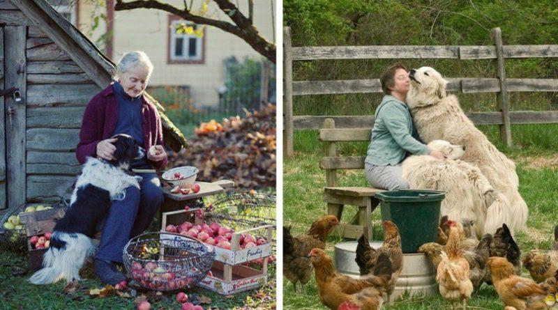 Бабушки и собаки