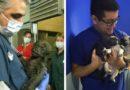 37 фото доказательств, что ветеринар – лучшая профессия в мире
