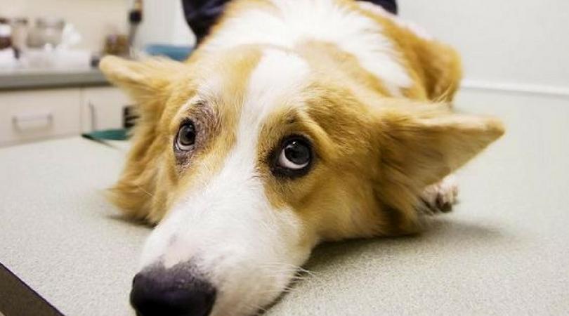 аллергия на собак симптомы у подростков
