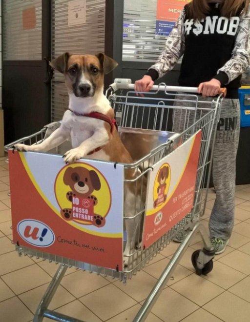 Магазин с собакой картинка