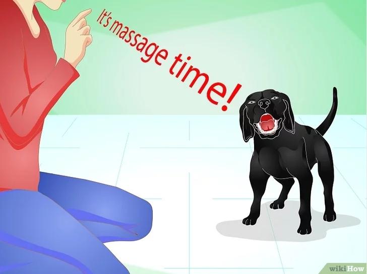 Общий массаж собаке