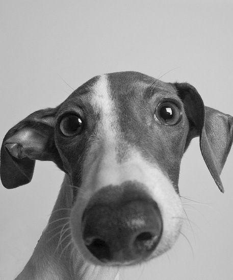 Запахи и болезни собак