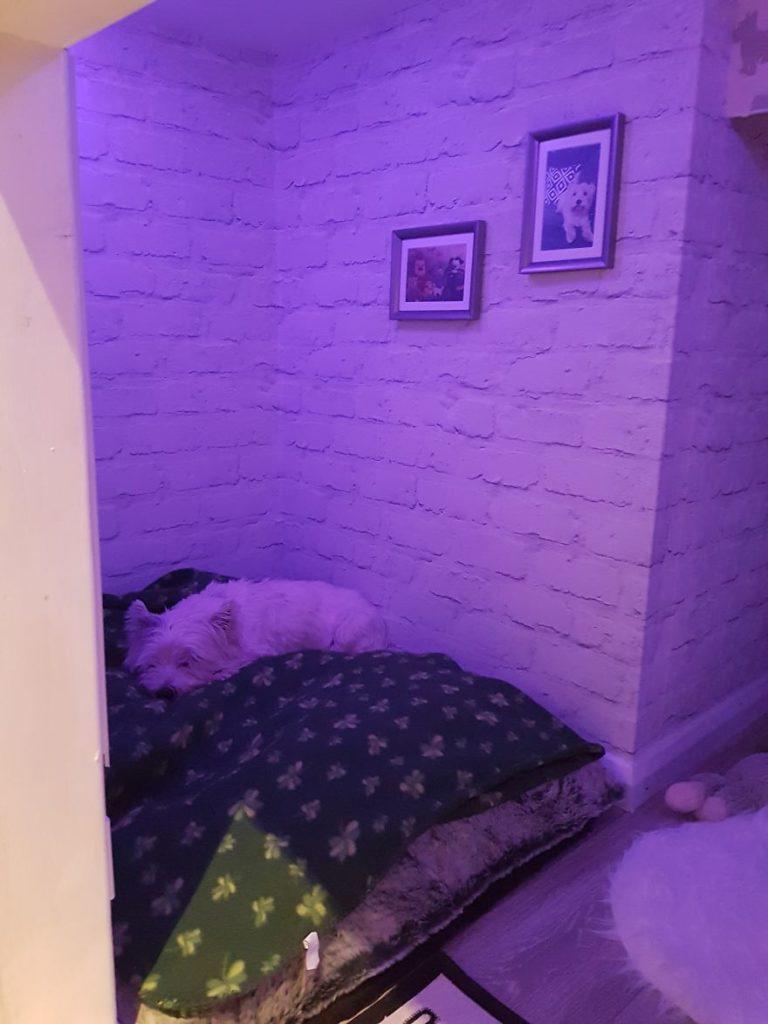 Комната для собак