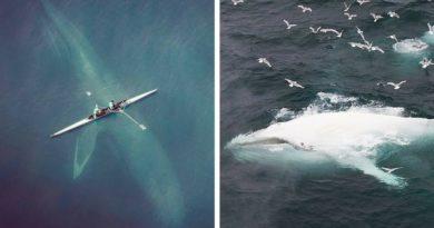Фото китов с воздуха
