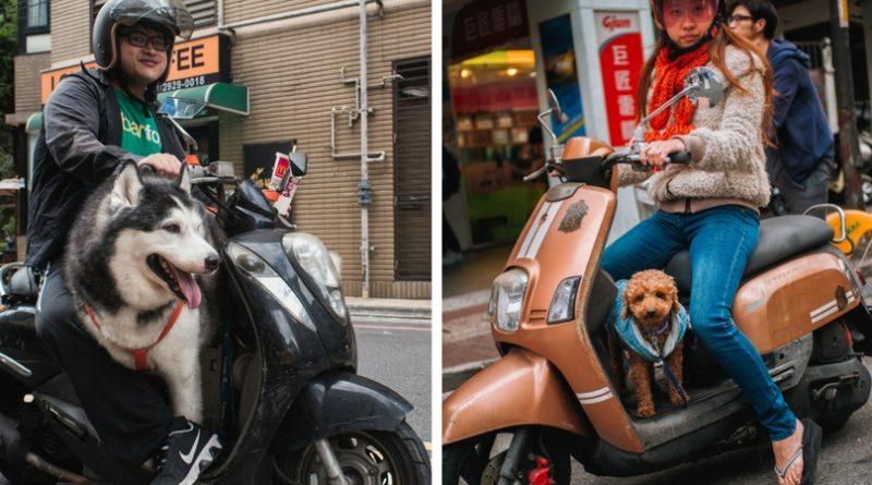 собаки на скутерах