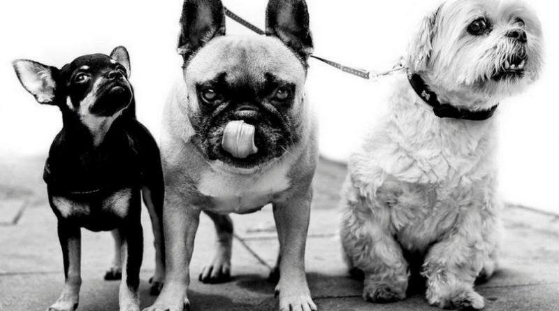 Собаки в работах уличного фотографа Алана Шаллера