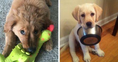 Если щенок охраняет пищу или игрушки
