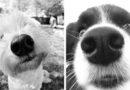 Как запахи убивают наших собак