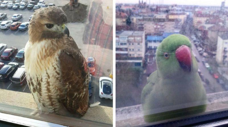 Птицы на окне