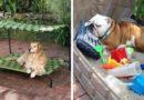 Собака на свежем воздухе: 45 идей для дачи и загородного дома