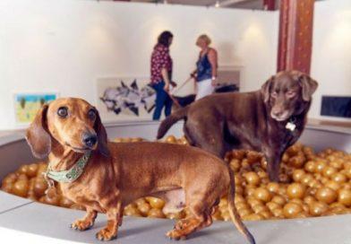 В Лондоне открылась первая выставка современного искусства для собак