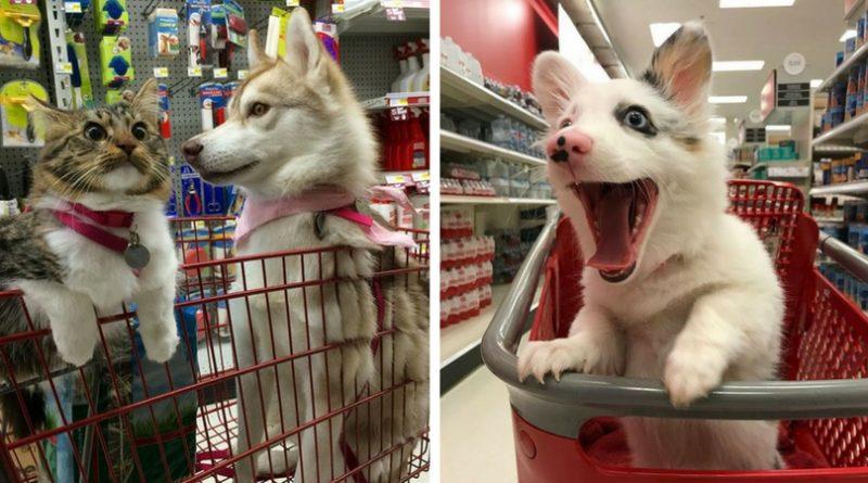 Собаки в продуктовых тележках